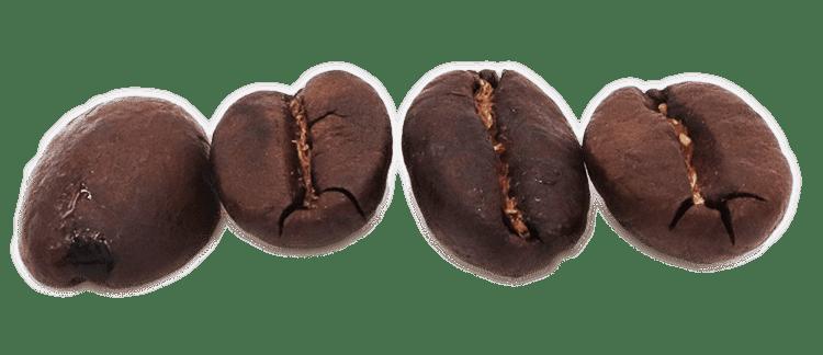 Flat coffee bean roasted